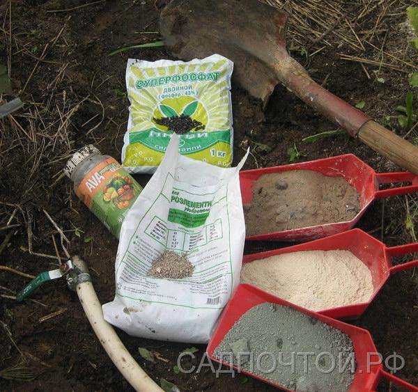 Саженцы - посадка, минеральные удобрения
